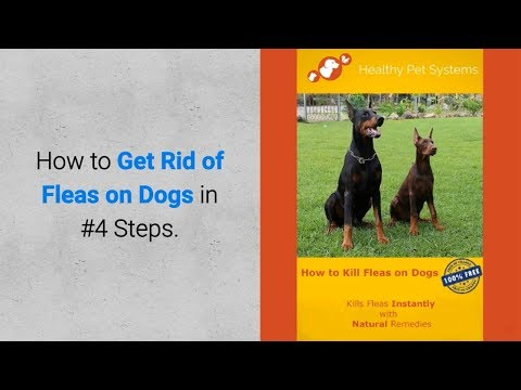 Professional HPS Guide - How to Get Rid of Fleas on Dogs in 4 Steps?