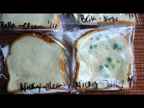 Bread  Mold Science Experiment Wash your Hands!