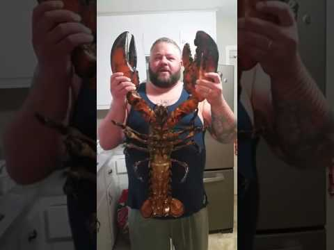 How to cook a 22lb jumbo lobster