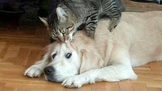 CLICK HERE only if you wanna LAUGH! - Craziest CATS & DOGS