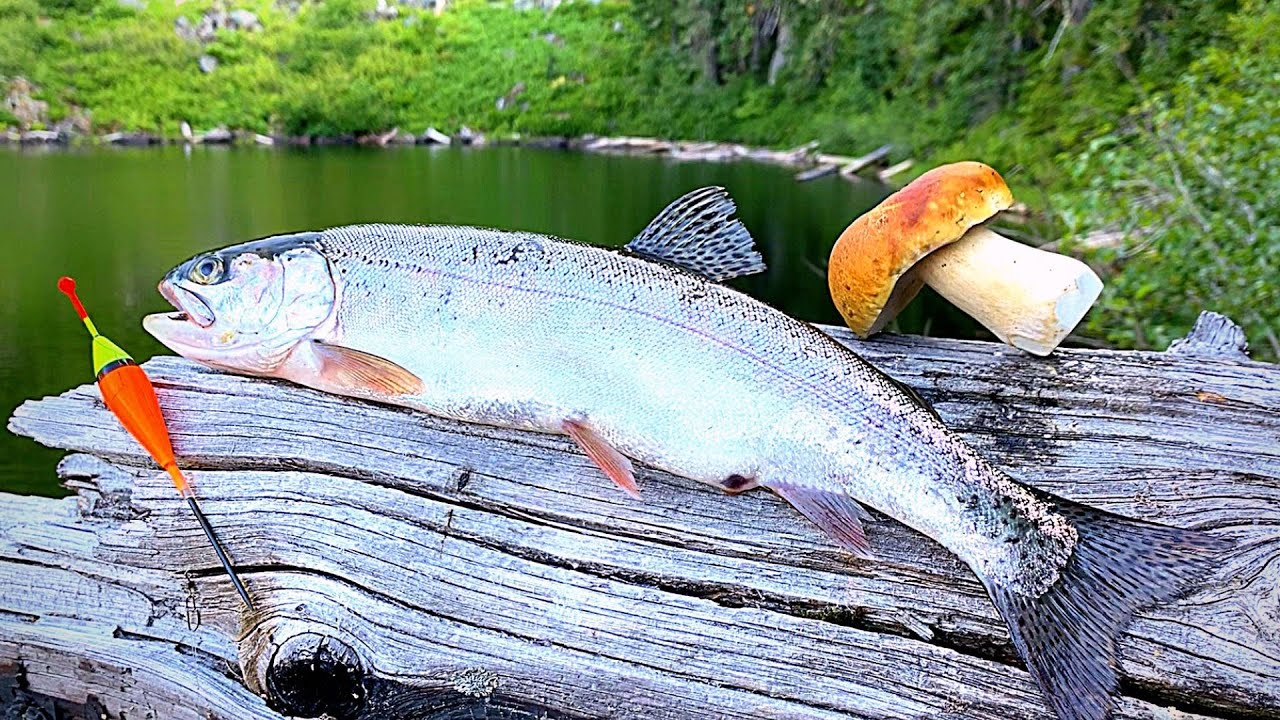 Alpine Lakes Trout Fishing with LIVE BUGS! Catch & Cook!!!