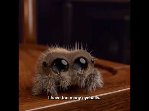 BEST VIDEO to overcome the 'Fear of Spiders'