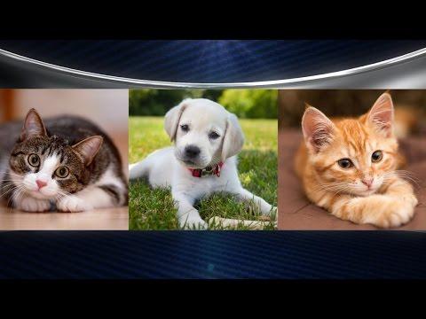 Divorce Court to Decide Pet Custody?