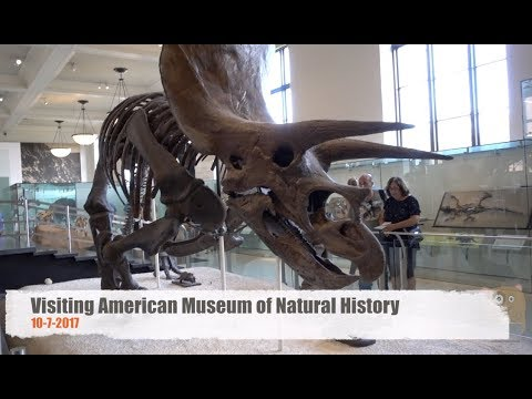 Visiting American Museum of Natural History