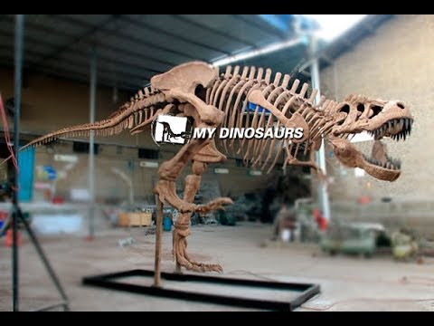 Giant Dinosaur Skeleton T rex Model