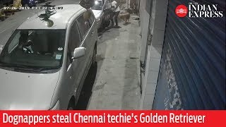 WATCH: Dognappers steal Chennai techie's Golden Retriever