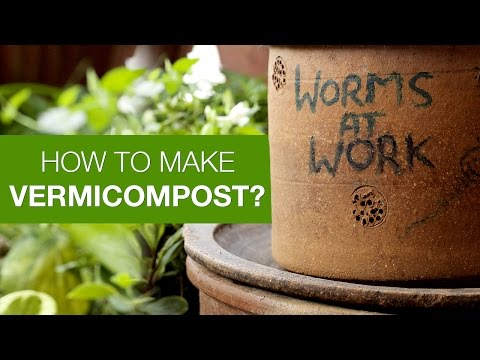 Vermicomposting: Indoor Composting with Earthworms