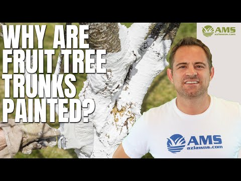 Why Do People Paint Citrus Tree Trunks White In Phoenix?