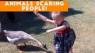 Funniest Animals Scaring People Reactions of 2017 Weekly Compilation | Funny Pet Videos