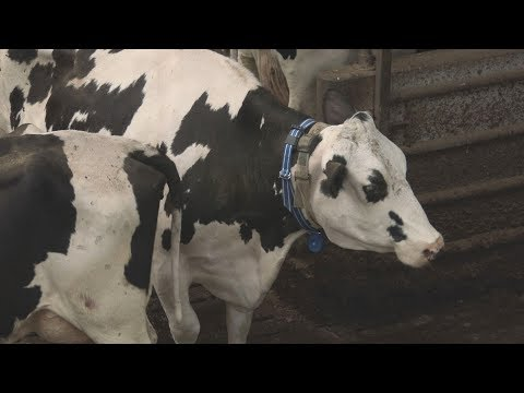 Sensors that make sense: from farming to water control