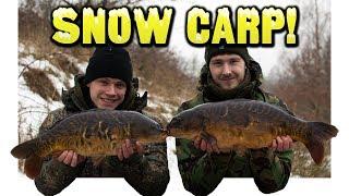 iPhone Carpers: Snow Carp!