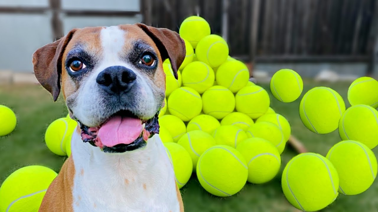 Surprising my dog with 100 GIANT Tennis Balls! 🎾🐶( BEST REACTION !!🎉)