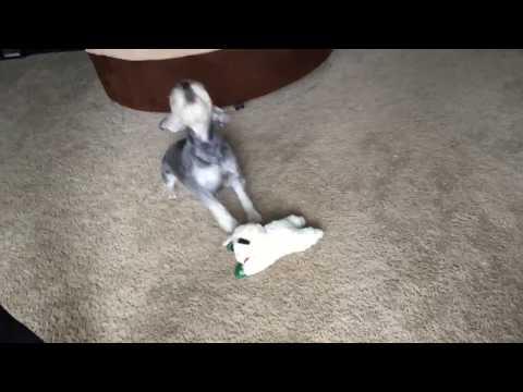 Vlogmas Day 9 - the dog onesie fail