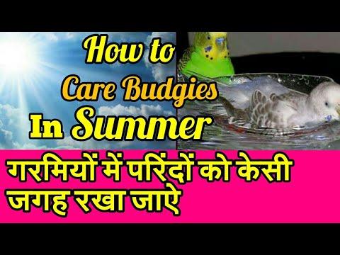 HOW TO CARE BIRDS   SUMMER ME KESE CARE KARE BIRDS KI   SUMMER ME CAGE KESI JAGAH RAKHA JAYE  