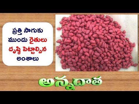 Seed Selection Of BT Cotton || ETV Annadata