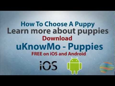 uKnowMo - How To Choose A Puppy