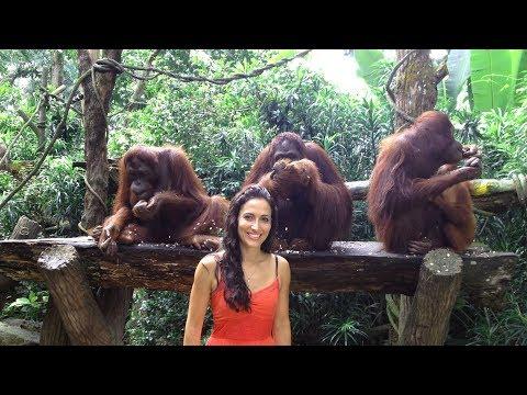 Singapore Zoo Breakfast with Orangutans