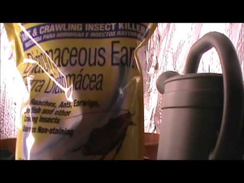 Gardening for Preppers: Killing insects and bugs without killing your soil!