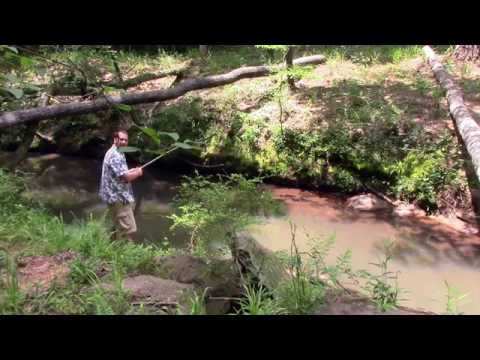 The Pen Fishing Rod Review