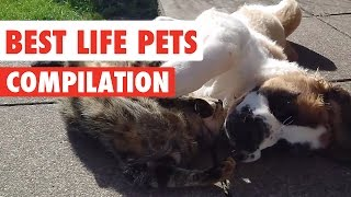 Best Life Pets Video Compilation 2017