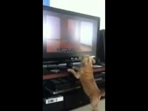 Dog barking at cat TV show.