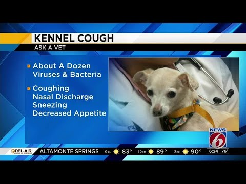 'Ask a Vet' - Kennel cough