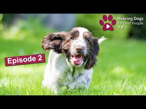 Hearing Dogs TV Episode 2: A puppy's first visit to Hearing Dogs