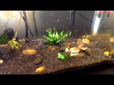 Brown algae blooms! Why does this keep happening!?