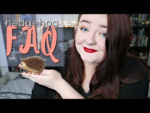 Hedgehog Care: Frequently Asked Questions
