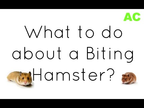 What to do about a biting hamster?