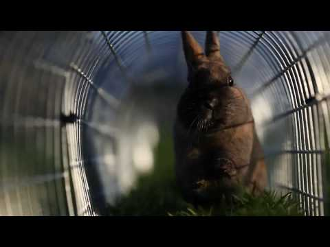 Runaround - The best place for a Rabbit
