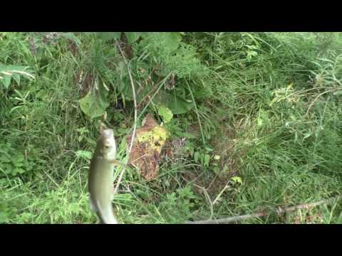 Ловля щуки на кузнечика