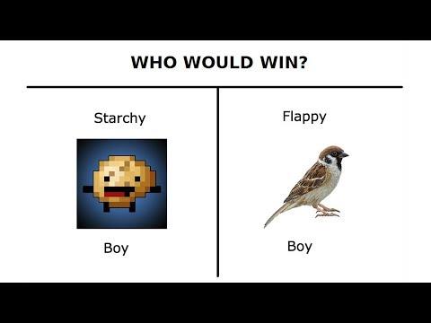 bird win every time