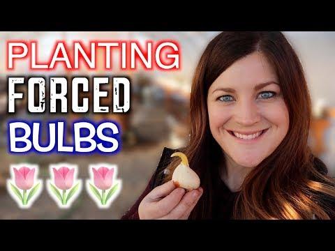 Mini Nursery Tour + Planting Forced Bulbs 🌿🌷💚 // Garden Answer