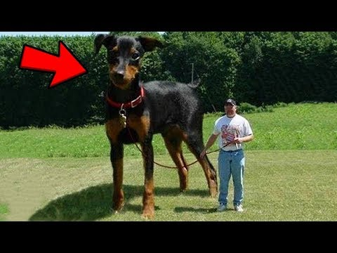 10 Real Giant Animals That Defy Belief!