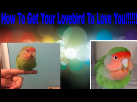 How To Get Your Love Bird To Love You