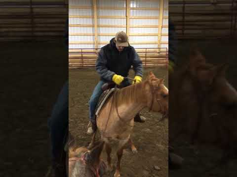 Training tip for buddy bound horses