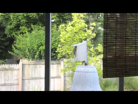 In our backyard: Bluebird stopping by to feed the babies inside the birdhouse.
