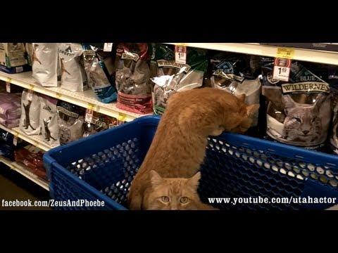 #Cats shopping at #PetSmart - OFF LEASH