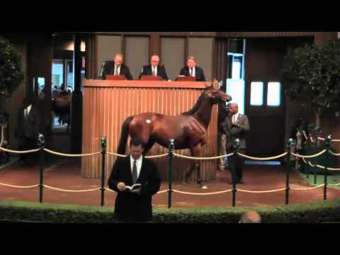 How Do I Establish the Value of My Horse