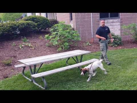 Blacksburg Police Drug Sniffing Dog Demo