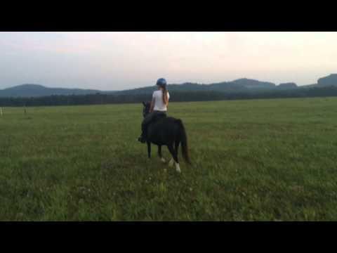Trawel Black Rose - Welsh Mountain Pony (A)