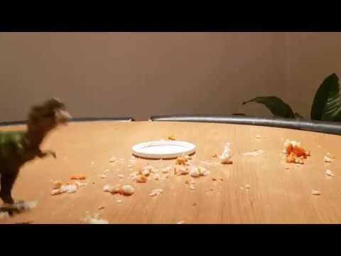 Dinosaur cake smash