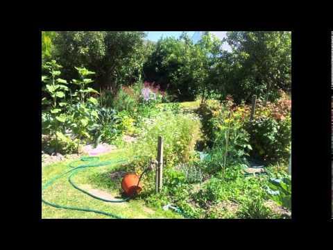 Backyard Garden | Backyard Garden Ideas | Backyard Vegetable Garden