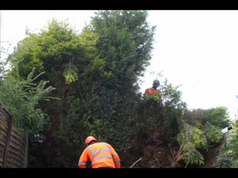 Hedge cutting & trimming timelapse Castle Donington | Canopy Tree Services 01332 875 869