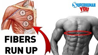 "How To Get The Chiseled ""Lower Chest Cup"""