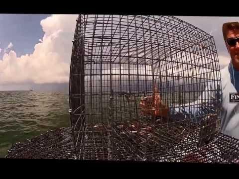 How to use a Bandito Key West Pinfish Trap