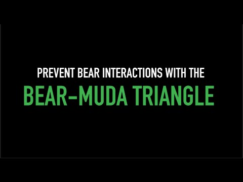 Tech Tip: Bear-muda Triangle Prevents Bear Interactions