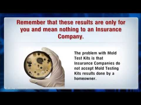 Mold Testing How To Test For Mold In Your Home