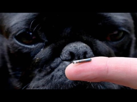 Microchipping: First your pet, then you
